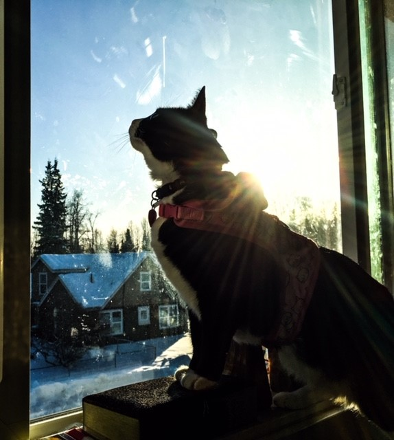 Winter Sunshine and Cat